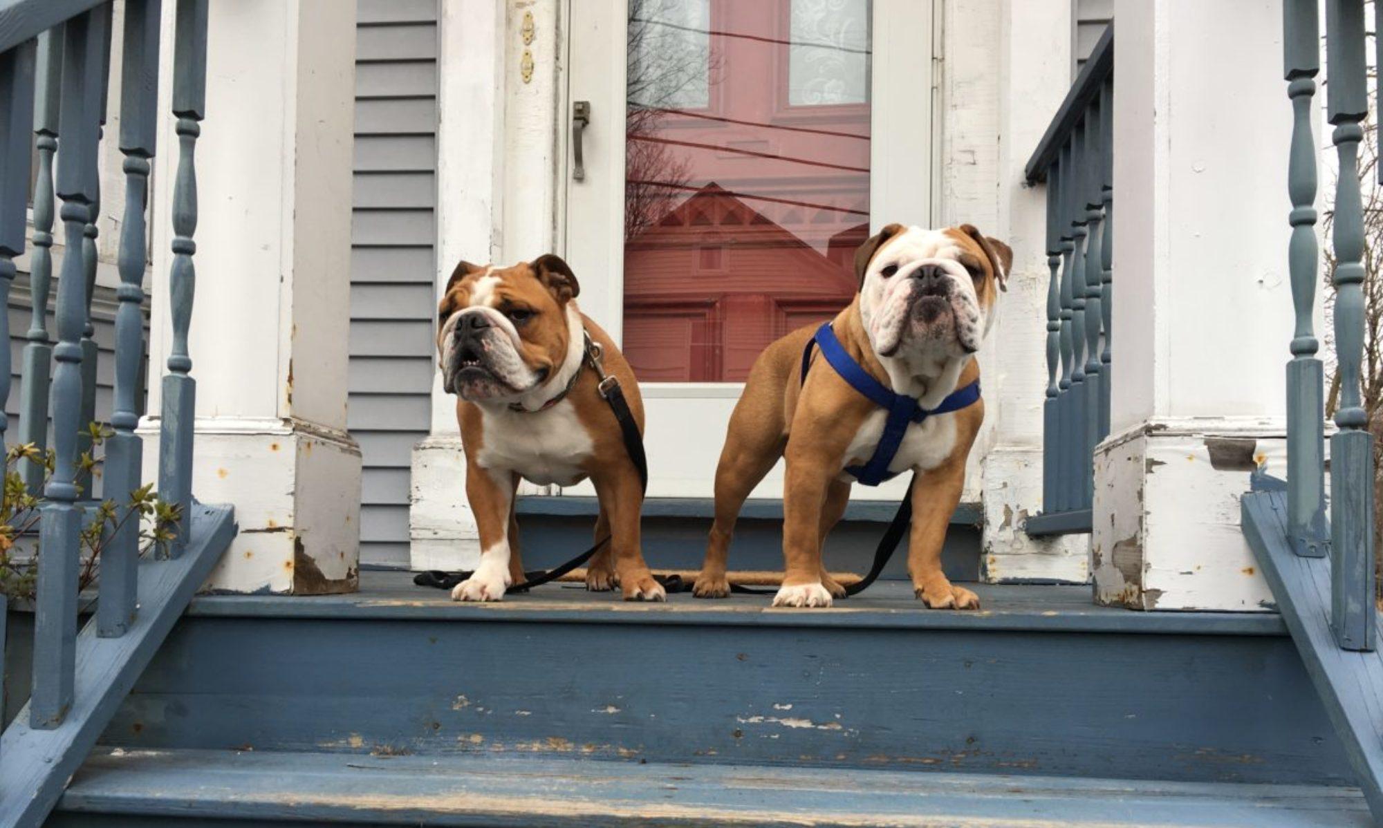 Dorchester Dog Walking & Boarding